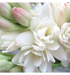 Fleur Tubéreuse