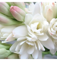 Tuberose Incense - flower