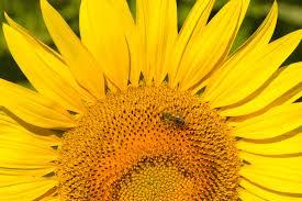Symbolique de la couleur jaune