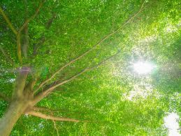 symbolique de la couleur vert