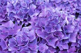 symbolique de la couleur violet