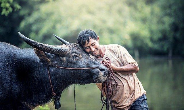 La complicité entre l'homme et l'animal, chacun prenant soin de l'autre !