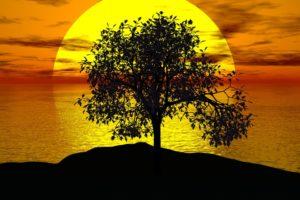 arbre-vie