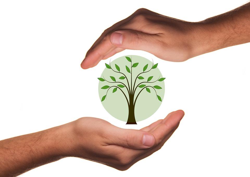 Arasia vous propose de participer à notre action de reforestation, 1 arbre = 1 euro !