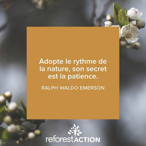 citation arbre