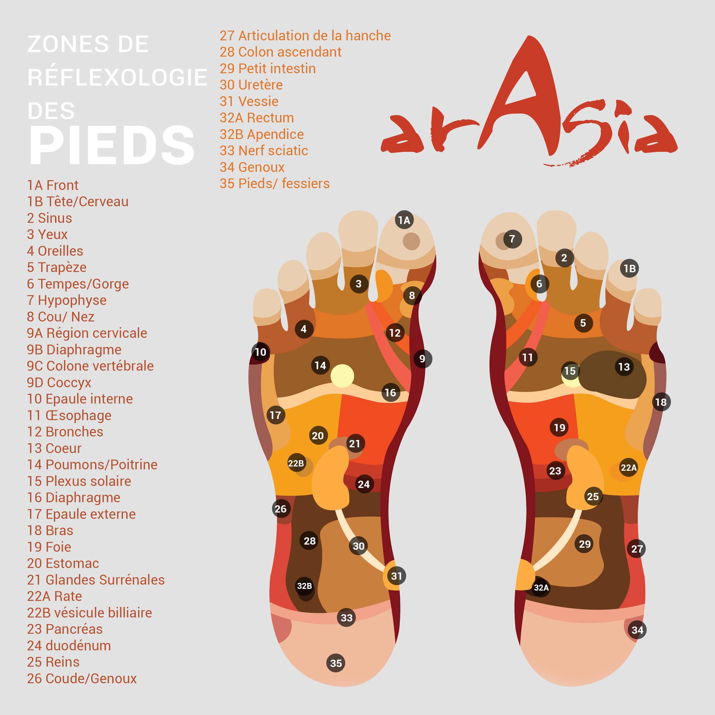 carte reflexologie pieds ARASIA