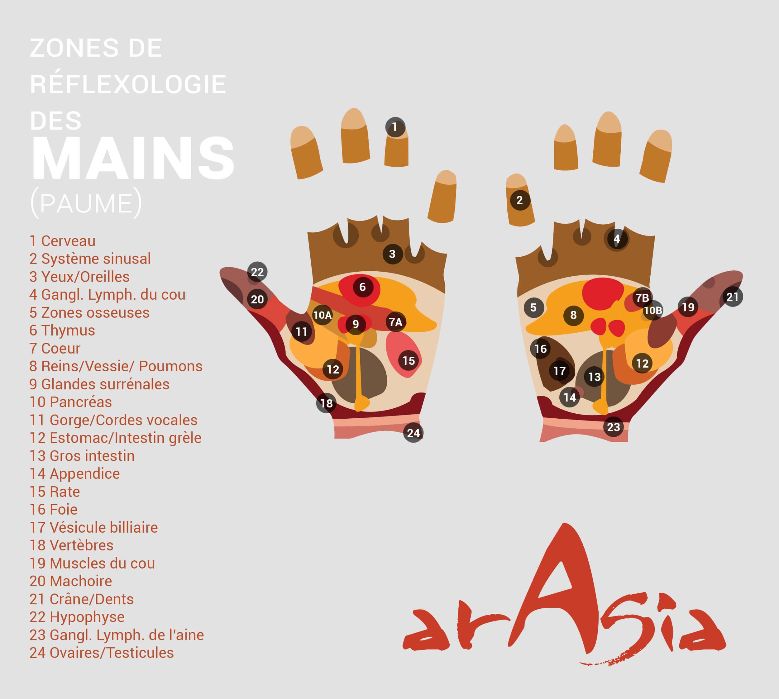 carte reflexologie paume des mains ARASIA